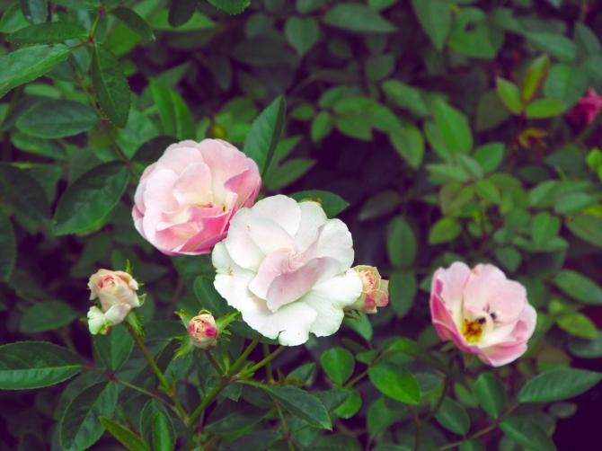 flora175